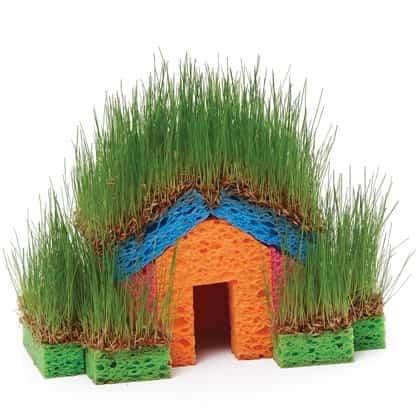 casa con esponja 2