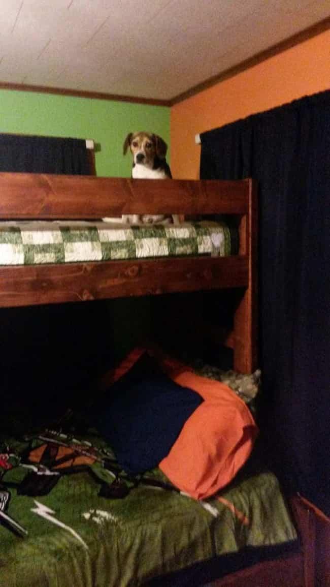 cama litera con madera reciclada 7