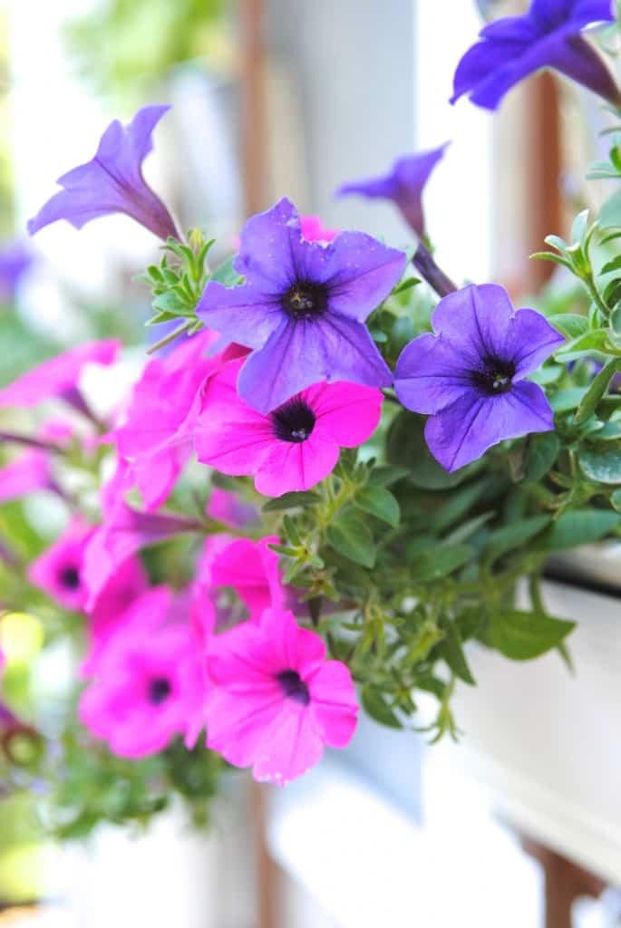 Cómo crear tu propio jardín vertical
