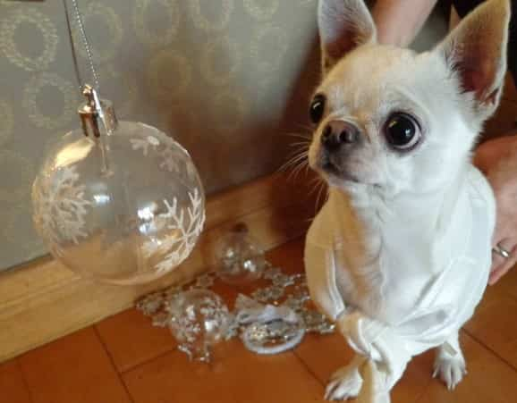 bola de navidad y perro