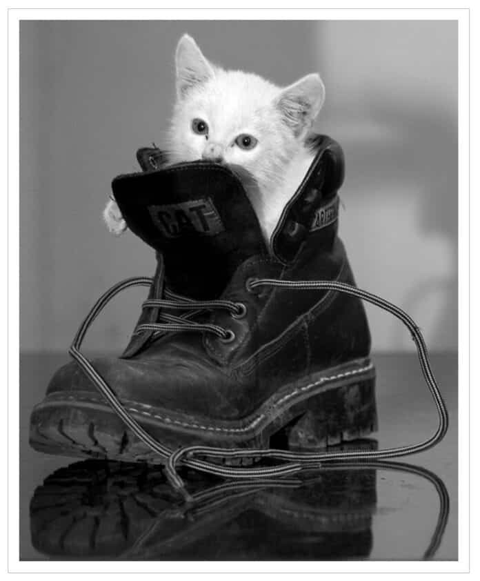 gato blanco dentro de una bota