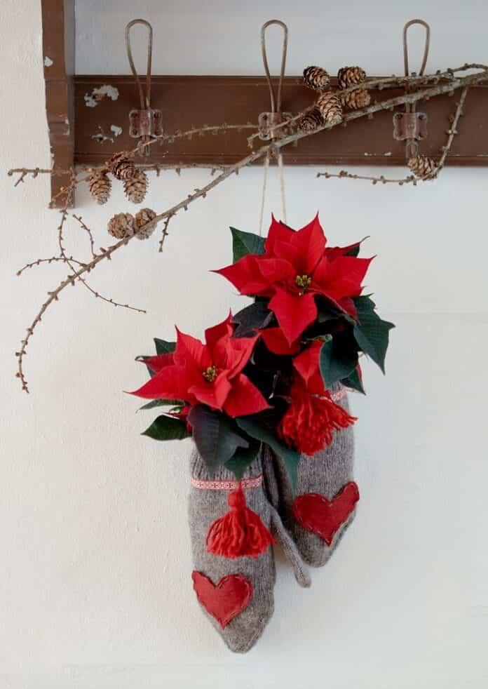 calendarios de adviento con flores de pascua 4